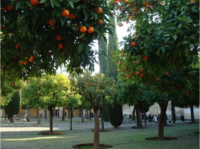 Patio de los Naranjos, Mezquita de Córdoba