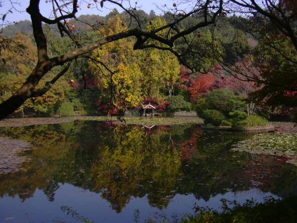 Jardín de Kinkakuji