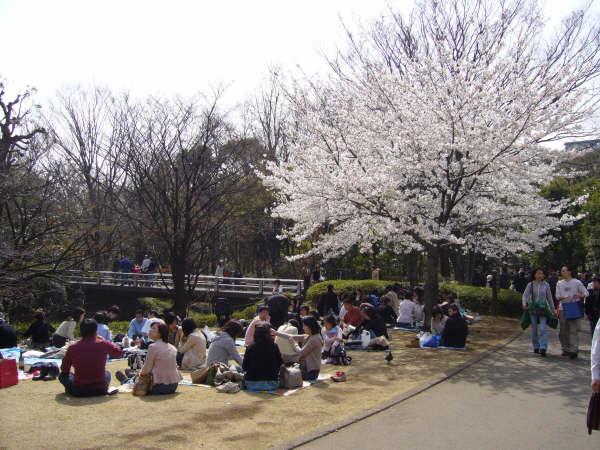 Hanami en Kitanomaru Koen, Tokio