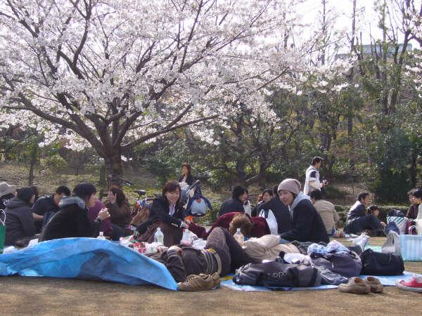 Hanami en Kitanomaru Koen, Tokio.
