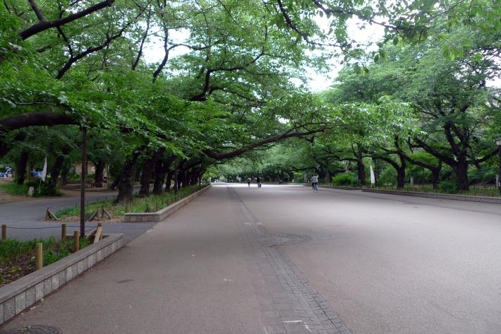 Paseo de cerezos en el Parque de Ueno